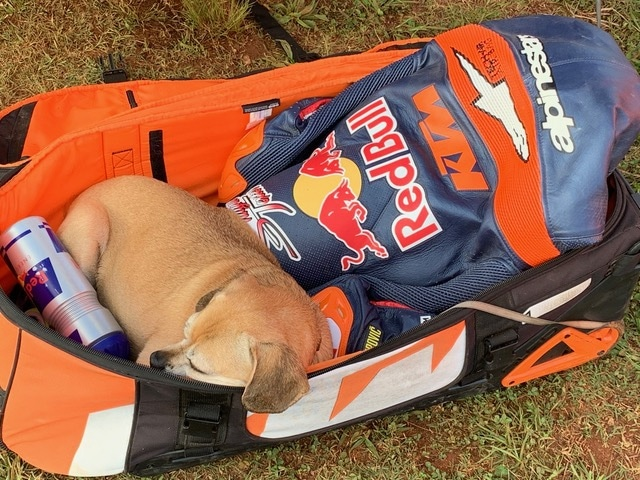 """Shayna's dog """"Ogio"""" found comfort in the warm sun in her gearbag on top of her leathers."""